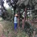 Autorização de corte de árvore