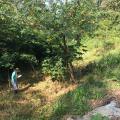 Autorização para corte de árvores cetesb