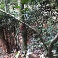 Autorização para corte de árvores sp