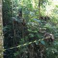 Autorização para supressão de vegetação