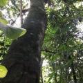 Autorização para supressão de vegetação ibama