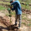 Plantio de mudas nativas