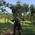 Preços de reflorestamento