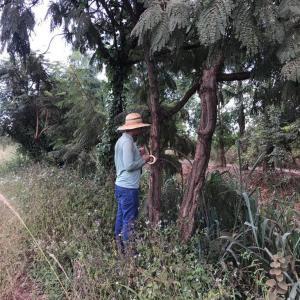 Autorização para supressão de vegetação cetesb