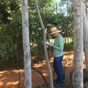 Autorização de supressão de vegetação para uso alternativo do solo