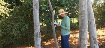 Autorização para supressão de árvores