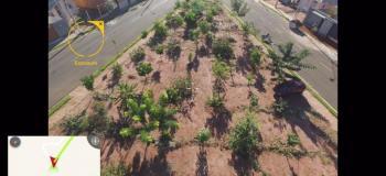 Projeto plantio de mudas